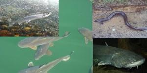 especies peixos