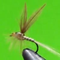La Josu Fly; una gran mosca para disfrutar durante y después...