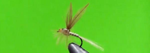 La Josu Fly; una gran mosca para disfrutar durante ydespués…