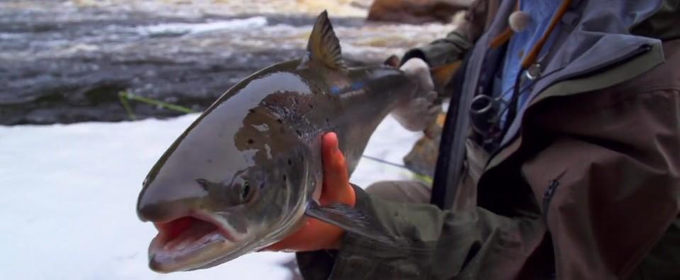 Pescado en la Red: A Fly Fishing Journey ThroughLabrador