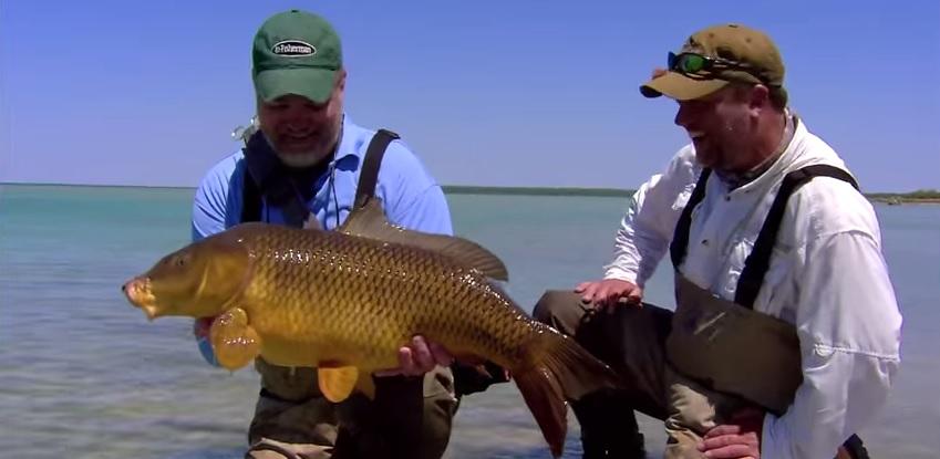 Pescado en la Red: Amazing Fly Fishing CarpAction!