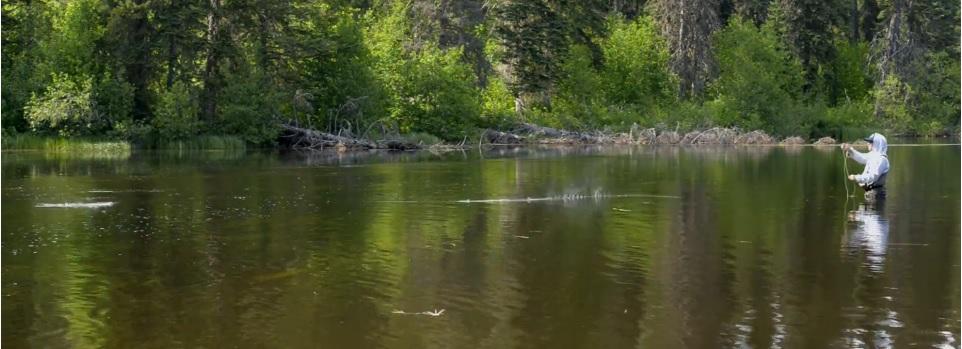 Pescado en la Red: The Joy is in theRise