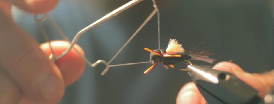 Pescado en la Red: Catching theHatching
