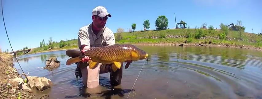 Pescado en la Red: Carp Fly Fishing – South Platte RiverDenver