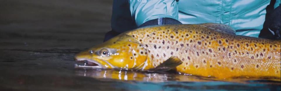Pescado en la Red: Fly-Fishing in the SnowyMountains