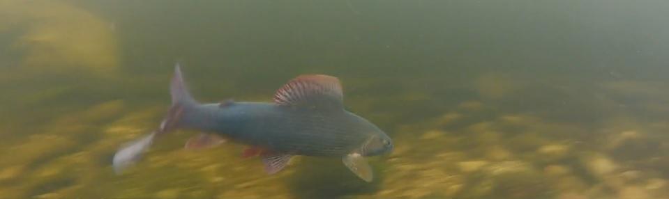 Pescado en la Red: Rena2