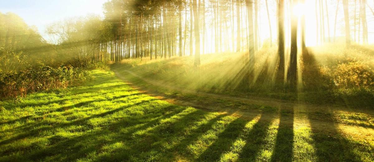 Komorebi; la luz que se filtra a través de las hojas de los árboles (J. Nieto)