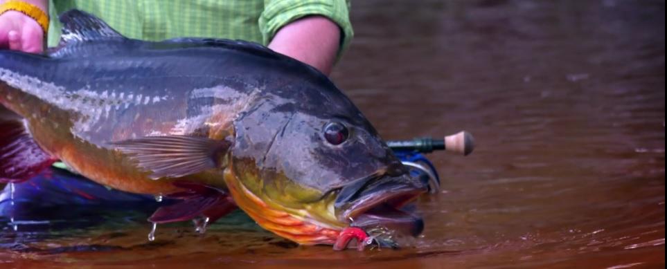 Pescado en la Red: Río Marié 2017Season