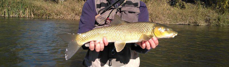 En busca de escamas doradas; pescadorcazador…?