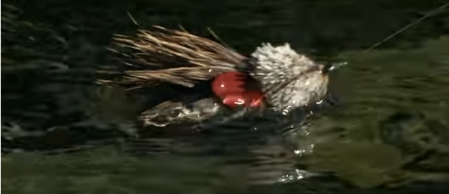 Pescado en la red: Huge Trout EatsMice