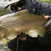 Vídeo: NZ FLY FISHING, Traveltruly
